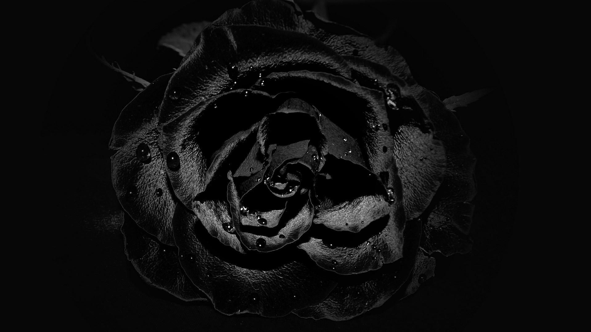 rose-607914_1920.jpg
